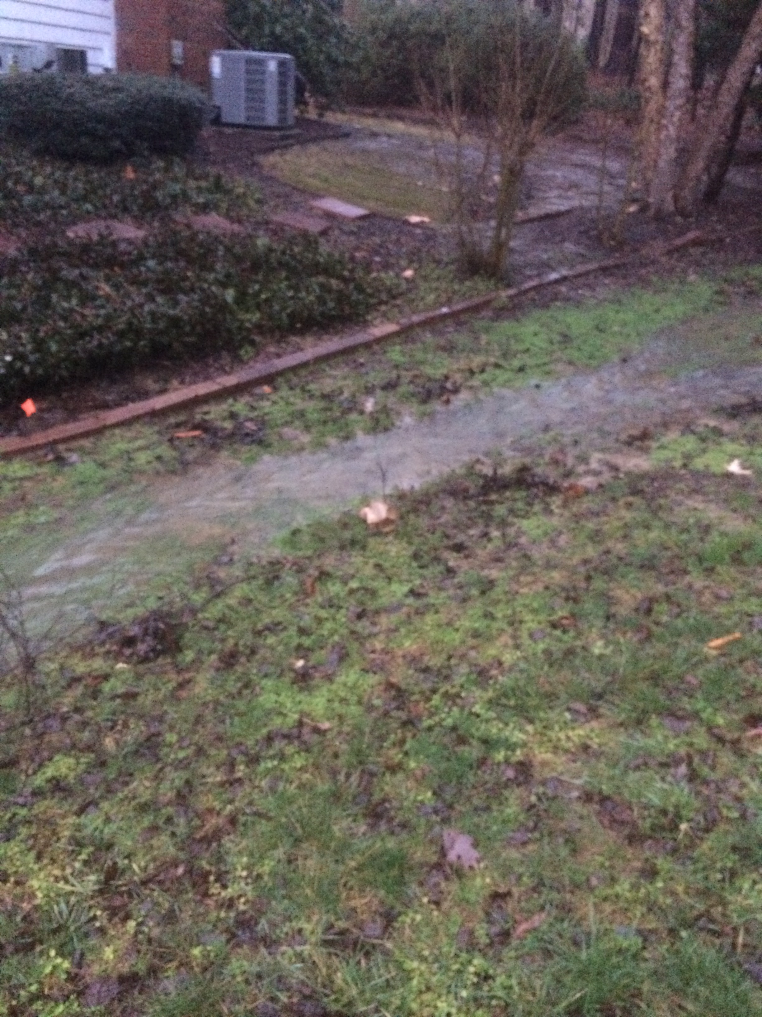 Backyard Tree Removal   GC Construction Services Inc ...